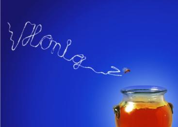 Honig Karenzzeit Fructoseintoleranz
