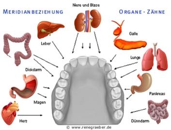 zähne fructose magen darm