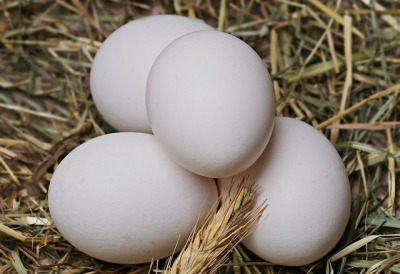 Frische Fructosearmer Brotzeit eier