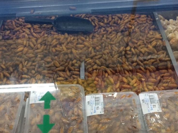 insekten fructosefrei