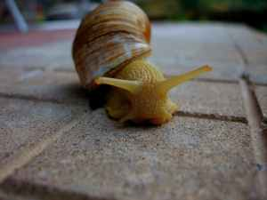 macro photo of yellow snail on ground