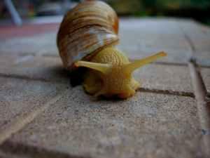 macro photo of yellow snail on ground