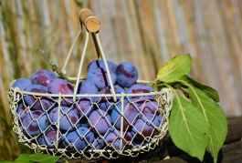 Zwetschgen Pflaumen Fructoseintoleranz Fructose Zucker