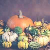 assorted colored pumpkin and squash arrangement wallpaper