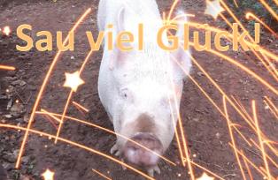schwein Fructoseintoleranz